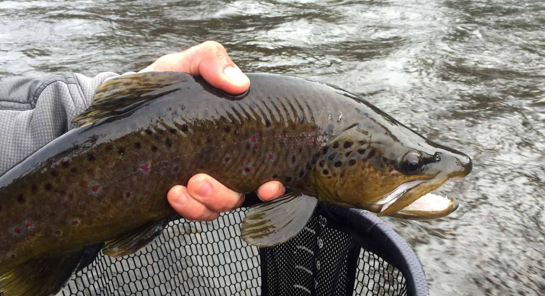 Fish Poop And The Holy Waters Gates Au Sable Lodge