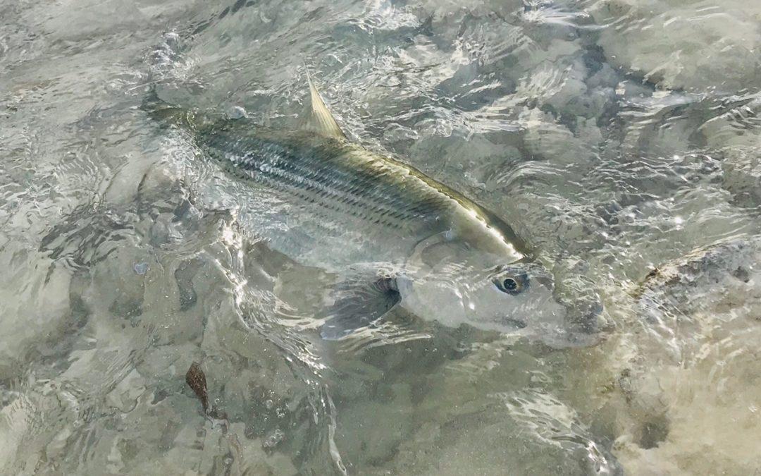 Winter's bone (fish)